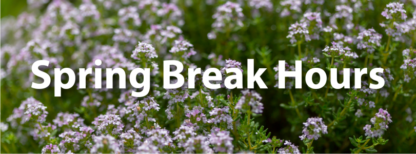 "Image of field of purple flowers with the text ""Spring Break Hours."""