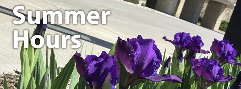 Purple iris outside the Union